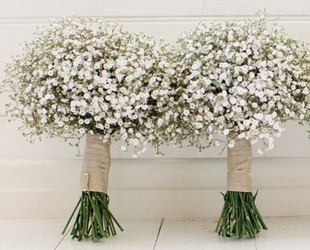 Gypsophila Wedding Flowers
