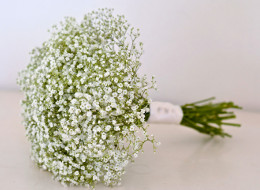 Gypsophila Package